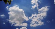 蓝天?#33258;?#26641;木图片