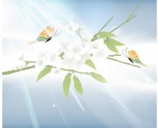 光与植物表达载体的性质