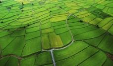 稻田风光图片