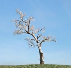 树木植物模型图片
