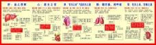 医院宣传画肝心脾肺肾内脏器官调养方法