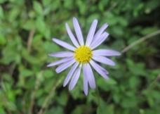 小花朵图片