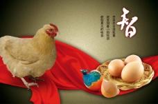 文化展板设计智 鸡 鸡蛋
