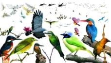 鸟类天堂图片