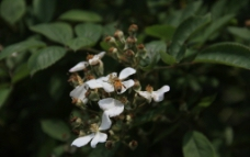 花丛中的蜜蜂图片
