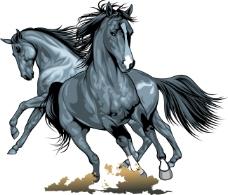 奔跑的骏马