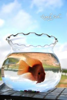 孤独的鱼儿图片