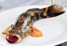 淡水鱼之王 沙蚌鱼图片