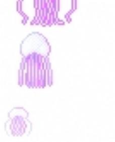 紫色 水母图片