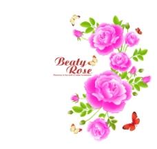 弧形玫瑰花图片