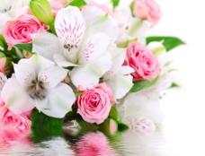鮮花設計圖片