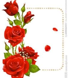 浪漫七夕玫瑰花图片
