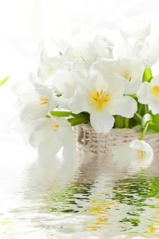 白色花圖片