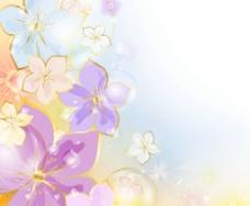 梦幻花卉图片
