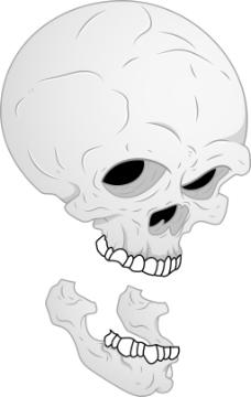 头骨和下颌