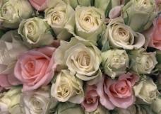 高清玫瑰背景