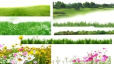 花草素材 花丛 草丛图片