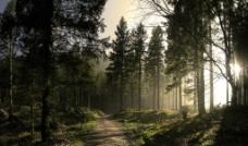 唯美森林背景图片