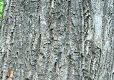 开裂的树皮背景