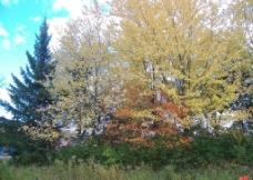蒙特利尔植物图片