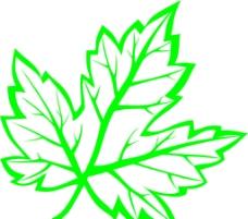 树叶图案图片