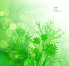 綠色花卉背景圖片