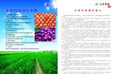 洋葱 三农资讯图片