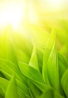 绿色叶子背景高清图片