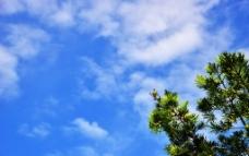 树上的鸟图片