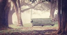 浪漫树林图片