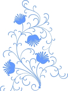 枝条花图片