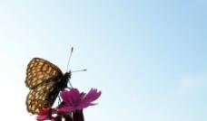 艺术蝴蝶图片