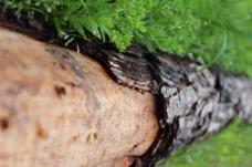 高清背景树木图片