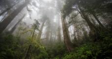 深山老林图片
