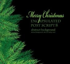 松树枝圣诞背景图片
