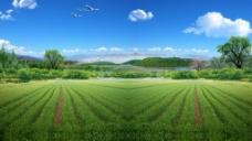 农田 自然景色图片