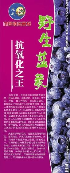 蓝莓展板图片