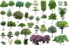 树 树木素材图片