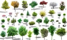 树 树集合图片