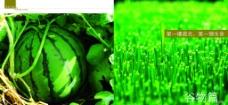 农业封面谷物篇图片