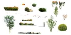 苗灌木配景素材图片