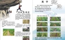 肥料彩页图片