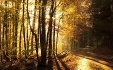 秋天树林高清免费背景素材下载