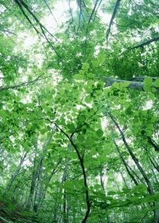 清晨绿色树林拍摄