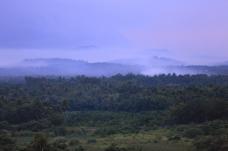 深山茂密树林拍摄