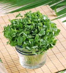 豆苗 绿色食品