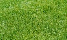 草地背景素材图片