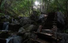林中木梯图片