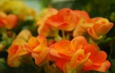 花黄色花朵图片