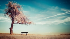 结婚背景  樱花树